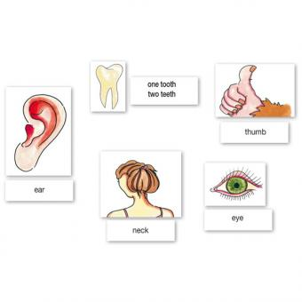 Word Picture Flashcards - Body