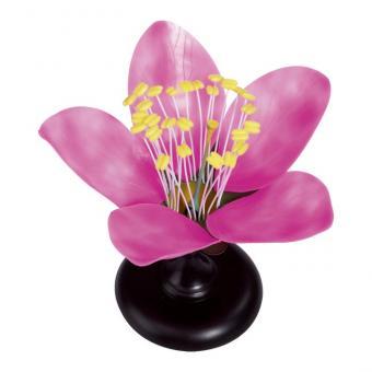 Modell Kirschblüte