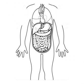 Organschürzen zum Selbstgestalten