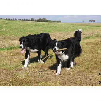 Kamishibai-Bildkarten, Max und Molly – zwei Hunde vertragen sich wieder