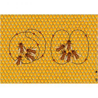 Kamishibai-Bildkarten, Von fleißigen Bienen und leckerem Honig